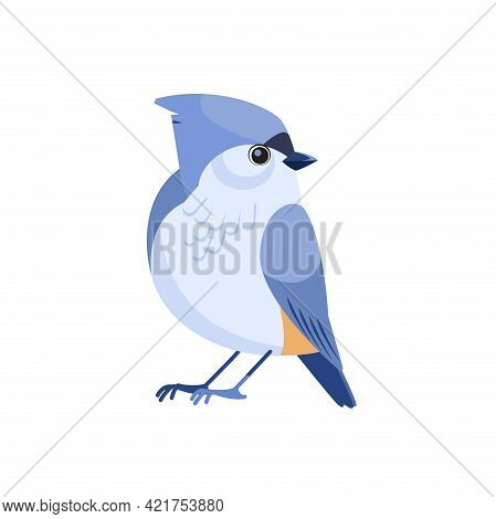 Tufted Titmouse Is A Small Songbird, A Species In The Tit And Chickadee Family Paridae . Cartoon Fla