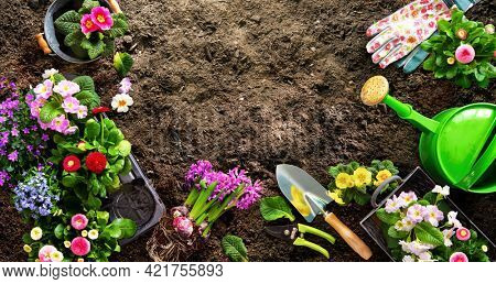 Planting spring flowers in the garden. Gardening tools and flowers on soil. Horticulture and gardening concept