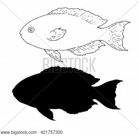 Vector Sketch Set Of Sea Fish Scarus Rubroviolaceus .silhouette And Outline Isolated Sea Fish Elemen