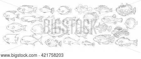 Beautiful Line Art Collection With Sketch Set Of Fish. Vintage Style. Line Art.vector Sketch Set Of