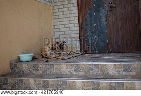 Shelter Dog Sad Adopt. Homeless Dog At The Shelter