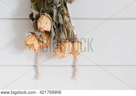 Yellow Roses Drying Upside Down On White Wooden Wall