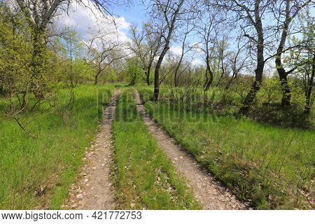 rural road in spring grove. Sunny spring landscape from Ukraine