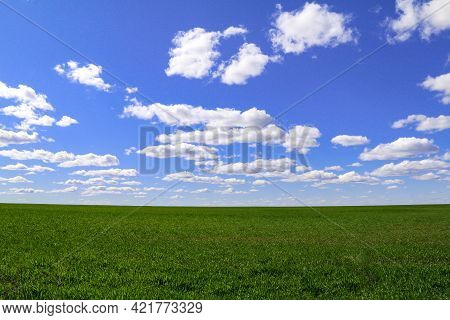 Lush Pasture Grassland Field With Horizon And Bright Blue Sky And Puffy White Clouds