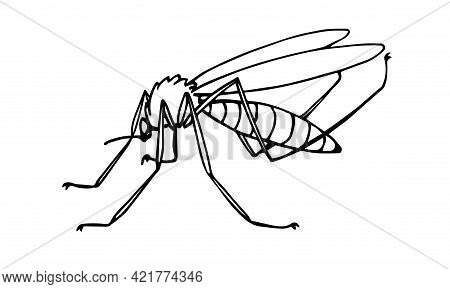 The Squeaker Mosquito, Flying Parasite Insect, Carriers Of Malaria And Other Diseases And Infections