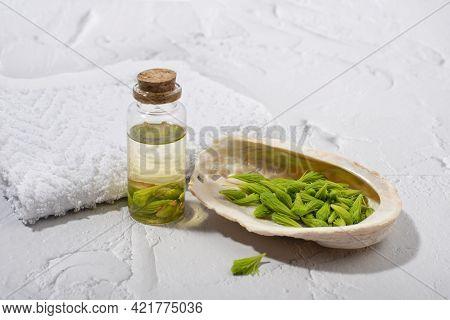 Spruce Tips Massage Oil. Alternative, Herbal, Natural Medicine, Spa Concept.