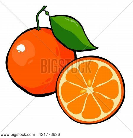 Drawn Ripe Orange Fruit With A Leaf On A White Background. Whole And Cut Orange. Vector Illustration