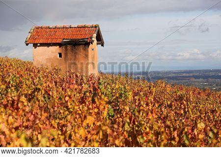 Vineyards In Morgon, Beaujolais During Autumn Seas