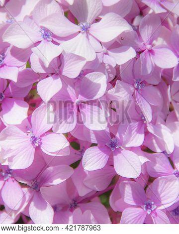 Petit Bright Violet Flowers