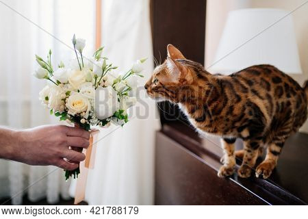 Cute Striped Cat Sniffs The White Bride Bouquet. Animals At The Wedding.