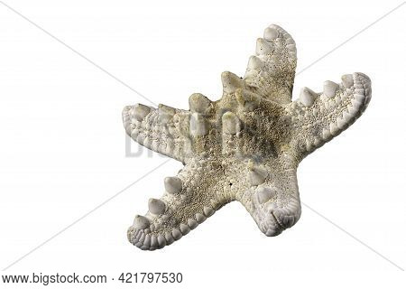 Starfish Shell. The Shell Protects The Mollusk Against Weather Conditions. Isolated Background.