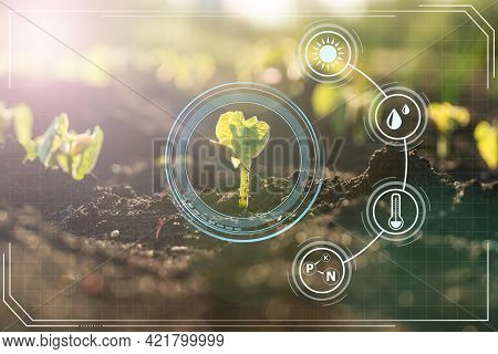 Agriculture With Iot Technology In Smart Farm With Precision Sensor For Monitoring Plants. Smart Far