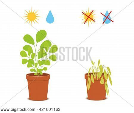 Potted Blossom Plant With Watering And Sunlight Symbols Vs Wilted Flower Without Care. Houseplant Gr