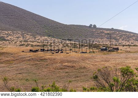 Santa Maria, Ca, Usa - May 21, 2021: Brown Dried Ranch Land With Black Cattle Near Water Tank In Fro
