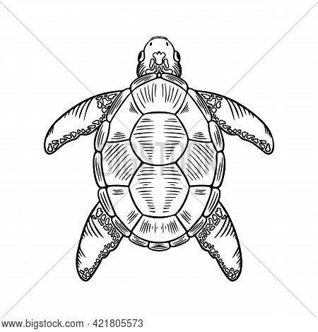 Sketch Sea Turtle. Vector Hand Drawn Illustration Of Eretmochelys Imbricata