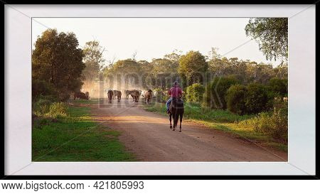 A Stock Man Riding A Horse Mustering And Droving Cattle Along A Dusty Dirt Road, Framed In Black And