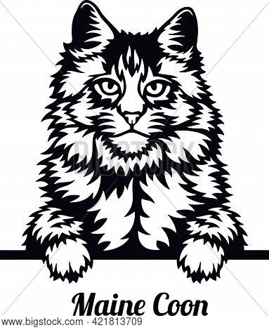 Maine Coon Cat - Cat Breed. Cat Breed Head Isolated On A White Background