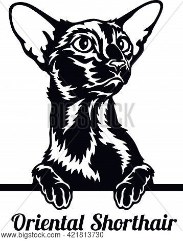 Oriental Shorthair Cat - Cat Breed. Cat Breed Head Isolated On A White Background