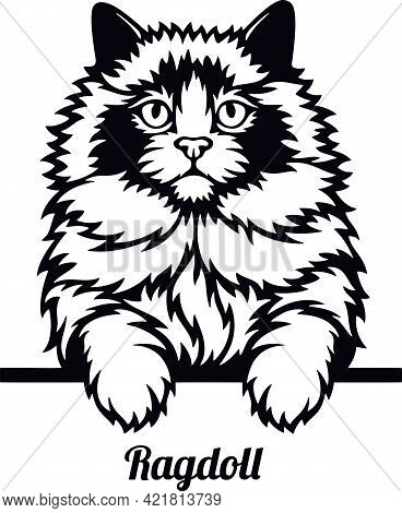 Ragdoll Cat - Cat Breed. Cat Breed Head Isolated On A White Background