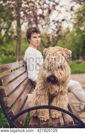 In The Foreground, A Fluffy Dog Sits On A Bench, With A Young Man Sitting Behind It. A Walk In The P