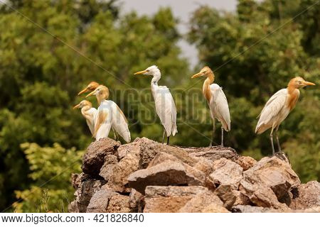 Birds Group Sited Together , Birds Family ,birds Group On Rock