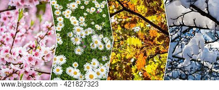Four Season Collage With Natural Themes - Flowers And Trees. All Used Photos Belong To Me.