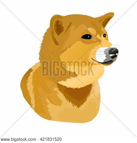 Shiba Dog Side Face With Red Scarf ,look For Something In A Portrait Photo Style.