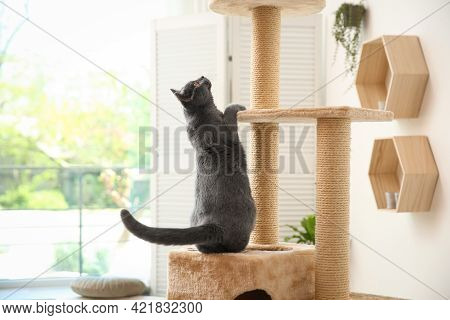 Cute Pet On Cat Tree At Home