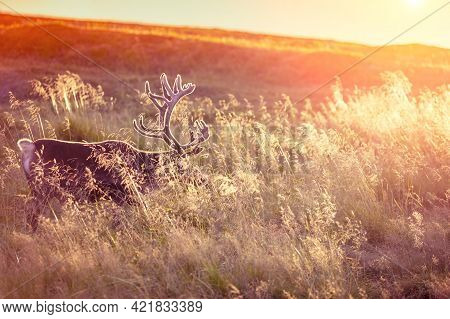 Silhouette Of A Deer Standing In Tall Grass At Sunset