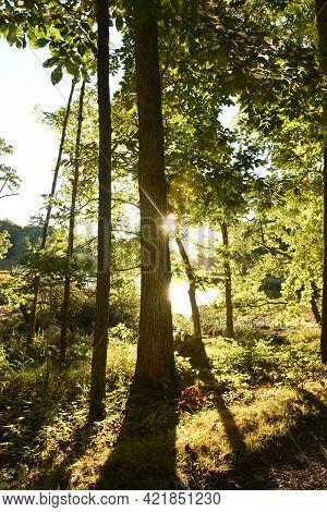 Sun Shining Through The Trees Along A River.
