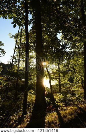 Wooded Trail And Forest With Sun Shining Through The Trees.