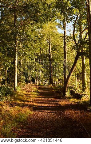 Hiking Trail Along A Footpath In The Woods.