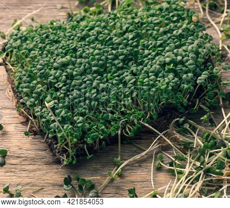 Green Sprouts Of Chia, Arugula And Mustard On A Table From Gray Wooden Boards, Top View. A Healthy F