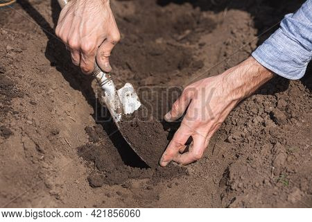 Gardener Digs Holes In The Soil With A Small Garden Trowel, Close Up