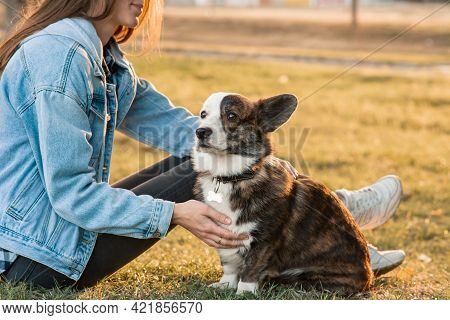 Obedient Welsh Corgi Dog With His Owner Practicing Paw Command. Happiness And Friendship. Pet And Wo