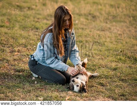 Smiling Woman Hugging Her Pet Welsh Corgi Dog Near Face. Welsh Corgi Dog Playing With A Woman Walkin