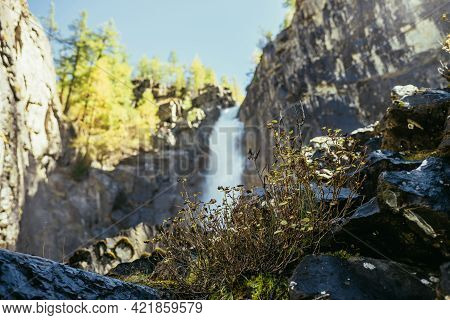 Scenic Autumn Landscape With Yellow Thickets On Rocks On Background Of Vertical Big Waterfall In Sun