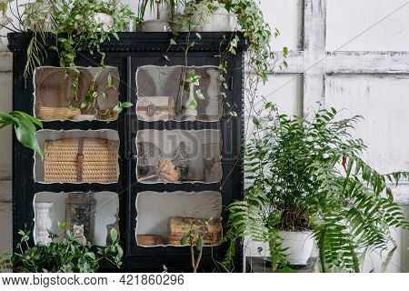 Close Up Shot Of Black Antique Cabinet With Potted Lush Plants On Top And Around Indoors Of Boho Chi