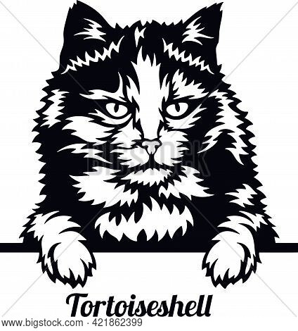 Tortoiseshell Cat - Cat Breed. Cat Breed Head Isolated On A White Background