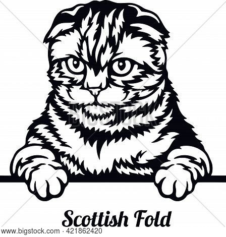 Scottish Fold Cat - Cat Breed. Cat Breed Head Isolated On A White Background