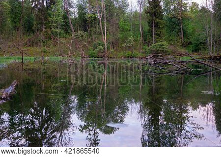Beautiful Forest Landscape With Clear Water Ponds In The Forest. Water Creates A Perfect Mirror Refl
