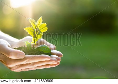 Human Hands Holding Green Plant Over Nature Background. Saving World Natural Environment And Sustain