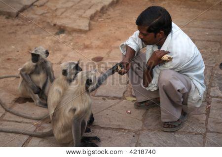 Man Feeding Monkeys