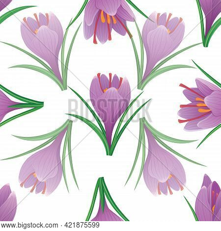 Vector Seamless Pattern With Crocus Purple Flowers 2