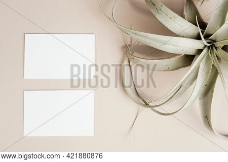 Blank business cards decorated with dried grasses