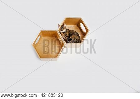 Orange Tabby Kitten Lays In A Modern Wooden Cat House On White Wall At Home In Light Room. Minimalis