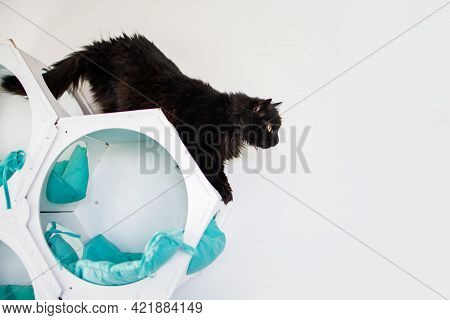 Portrait Of A Black Cat At Home In A Minimal Interior On White Background.