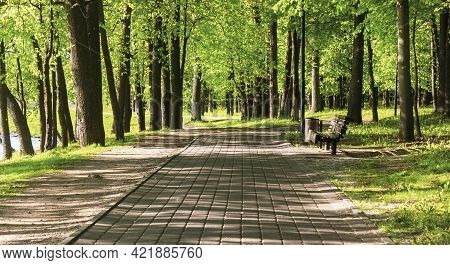 A Beautiful Alley In A Spring Park In Sunny Weather.