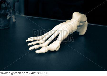 White Prototype Of The Human Foot Skeleton Printed On 3d Printer On Dark Surface