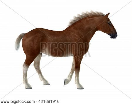 Belgian Horse 3d Illustration - The Belgian Is A Distinctive Breed Of Horse Developed In Belgium As